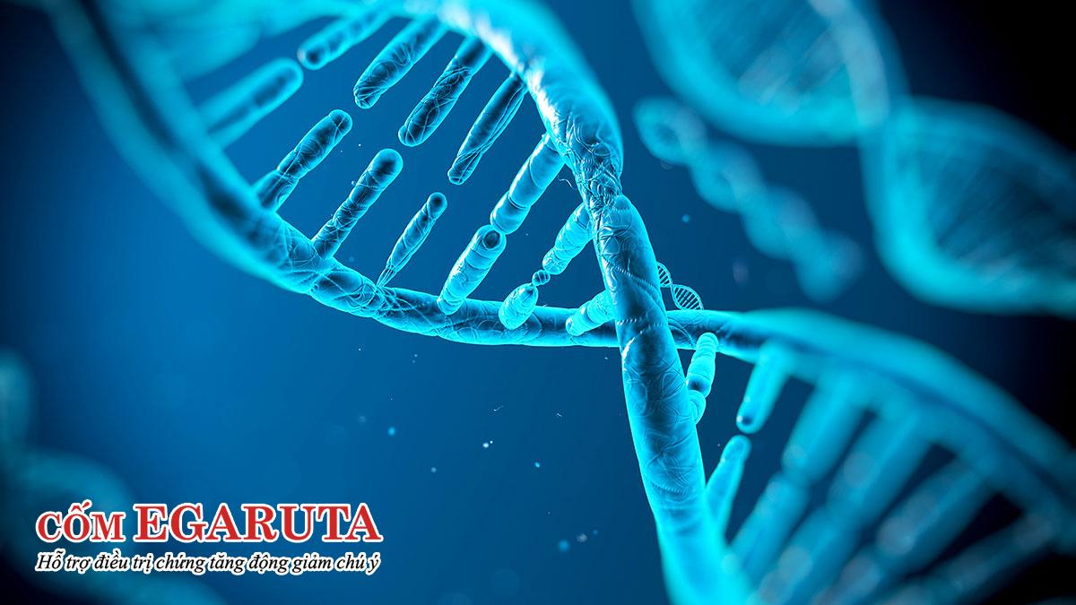 Bệnh tặng động di truyền không? Gen di truyền chiếm 70 – 80% nguy cơ!